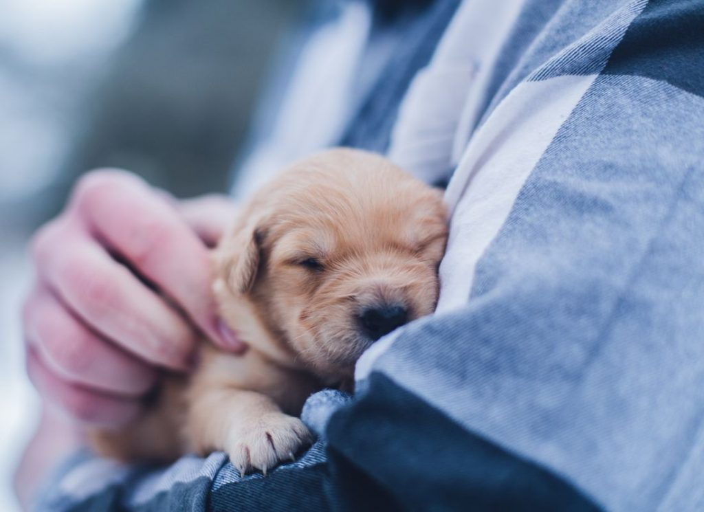 cute dog resting in the arms of a person who is cossing him